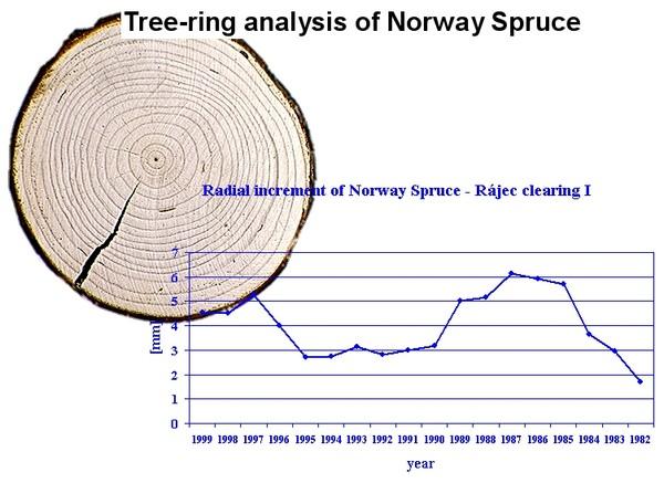 Stav hospodsk pravy lesa a aplikovan geoinformatiky analysis of annual radial increments of wood species tree ring analysis ccuart Gallery